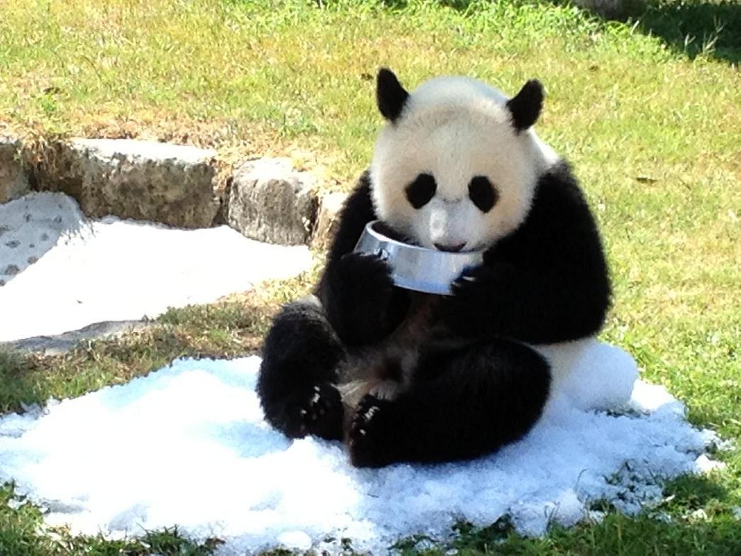 アドベンチャーワールド パンダの新ツアーを発表 7 31 です
